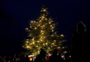 AVÍZO: V neděli rozsvítíme vánoční strom v Zoo Praha